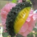Мыло ручной работы в форме Дуриана Fara Spa Soap Durian