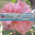Зубная паста Twin Lotus Fresh & Cool 100 гр.
