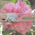 Зубная паста Isme Rasyan With Aloe Vera & Guava Leaf 100 гр.