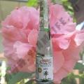Кокосовое масло Thai Pure Coconut Oil 100 мл.